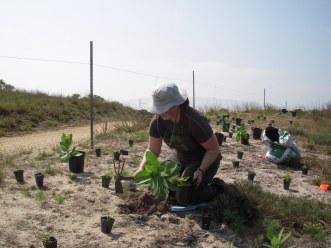 Kelly planting native plants in trailside restoration at Sanford Farm