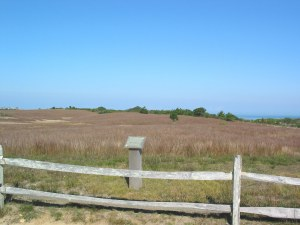 Open sandplain grasslands at Tupancy Links
