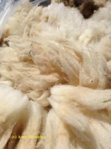 wool-2013
