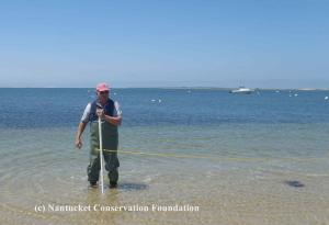 NCF Board Member Nathan Allan helping survey horseshoe crabs