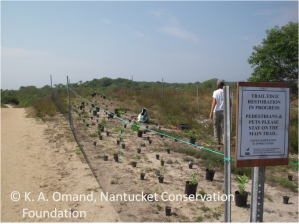 Sanford trail edge area with fence and signs to temporarily protect the seedlings that will be planted.