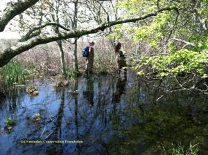 """Cyndi Parks and Iris Clearwater, NCF's seasonal field assistants, work to relocate """"Waldo"""" in his red maple pool on the edge of the Medouie Creek marsh."""