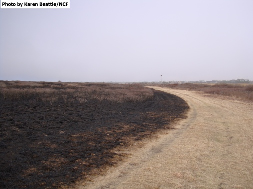 Ram Pasture Unit A Post Burn April 5 2014 014 watermarked