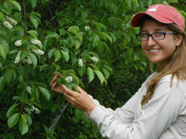 Andee with black cherry (Prunus serotina)