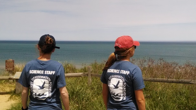 Science Staff checking out the ocean at Tuppancy Links