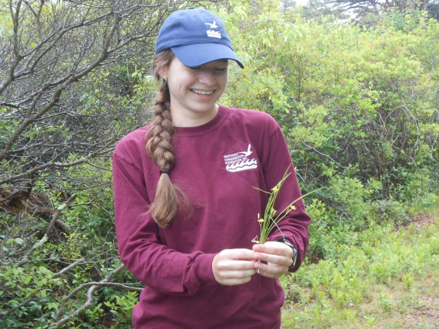 Katherine with yellow star grass (Hypoxis hirsuta)