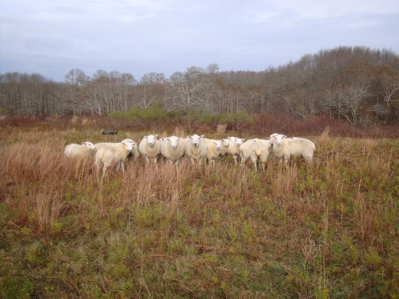 Sheep Squam Nov 2012 001