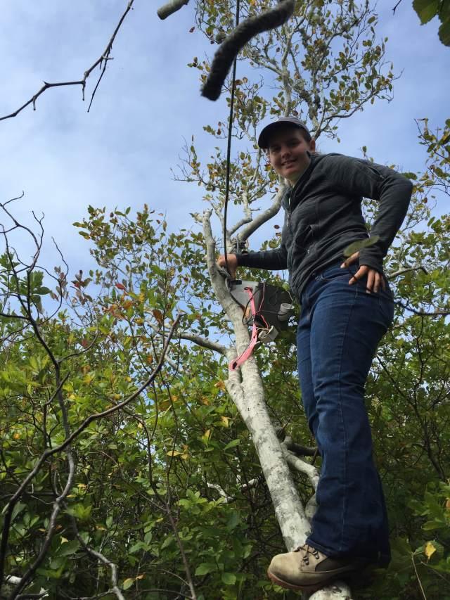 Scaling a tree to check a bat box!