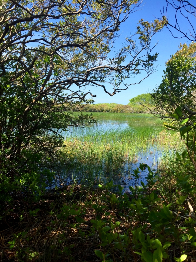 Nantucket Pond, Photo Credit: Kaitlyn Evans