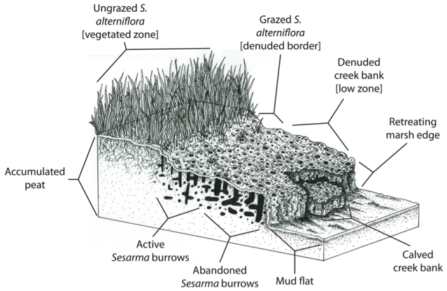 Marsh_erosion