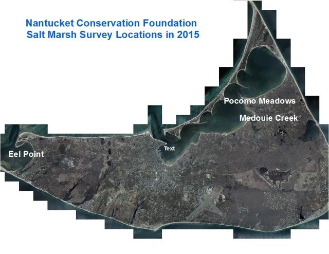 Salt marsh dieback survey locations. Extensive dieback in Pocomo Meadows and Medouie Creek but very little observed at Eel Point