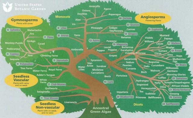 plant_family_tree_usbg