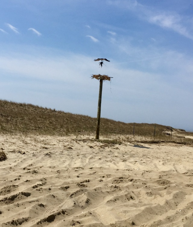 Oprey 2016 new pole