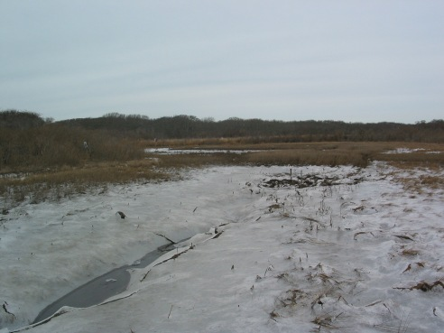Covered in ice, the salt marsh is busy preparing for spring.