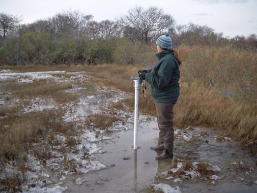 Measure tide water levels during winter storms in a salt marsh