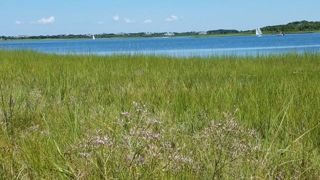 Salt Marsh, Sailboats, Sea lavender at Masquetuck,KAO