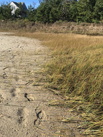 Sand over salt marsh JMK