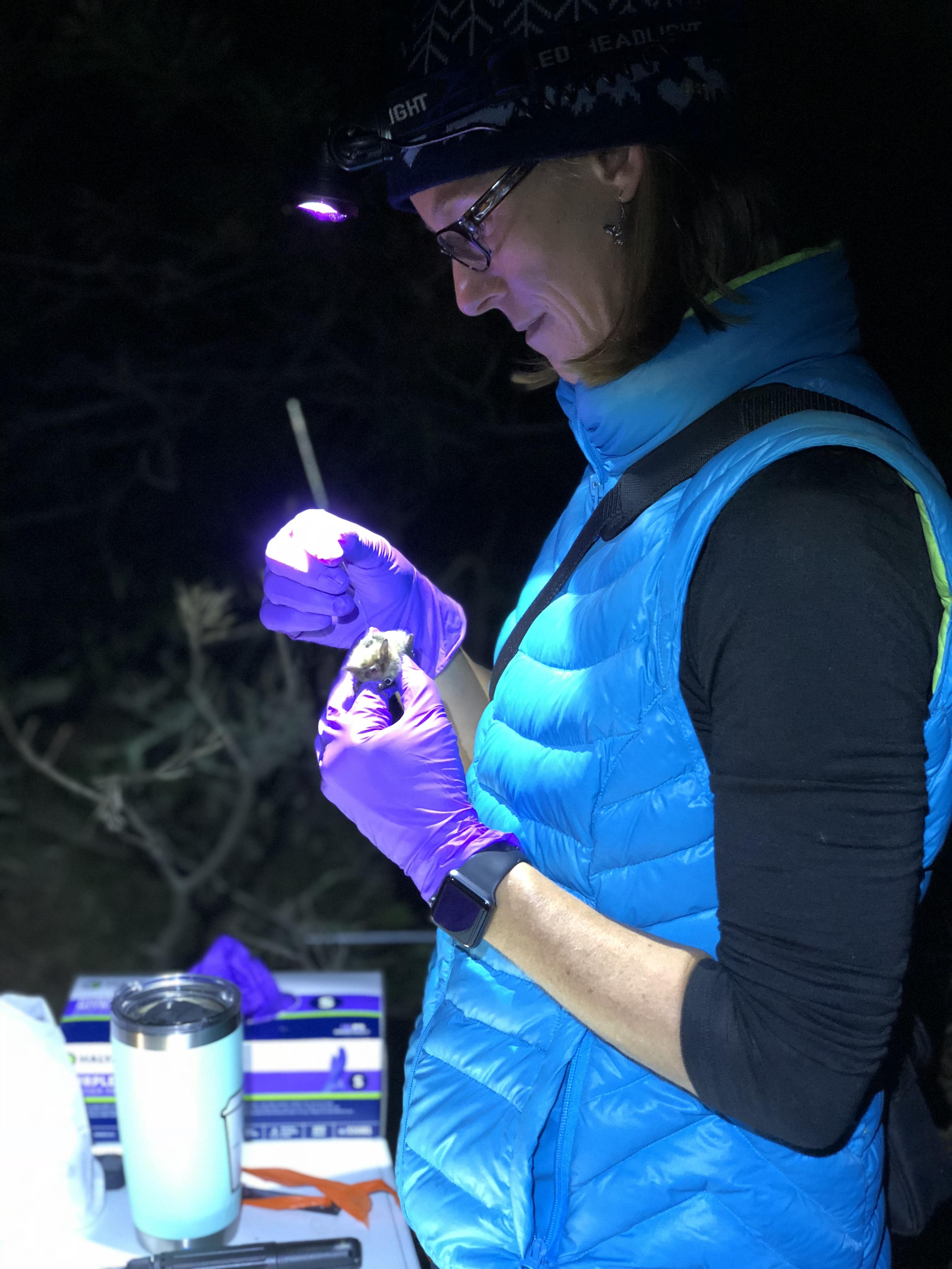 DIO attaching transmitter 2018