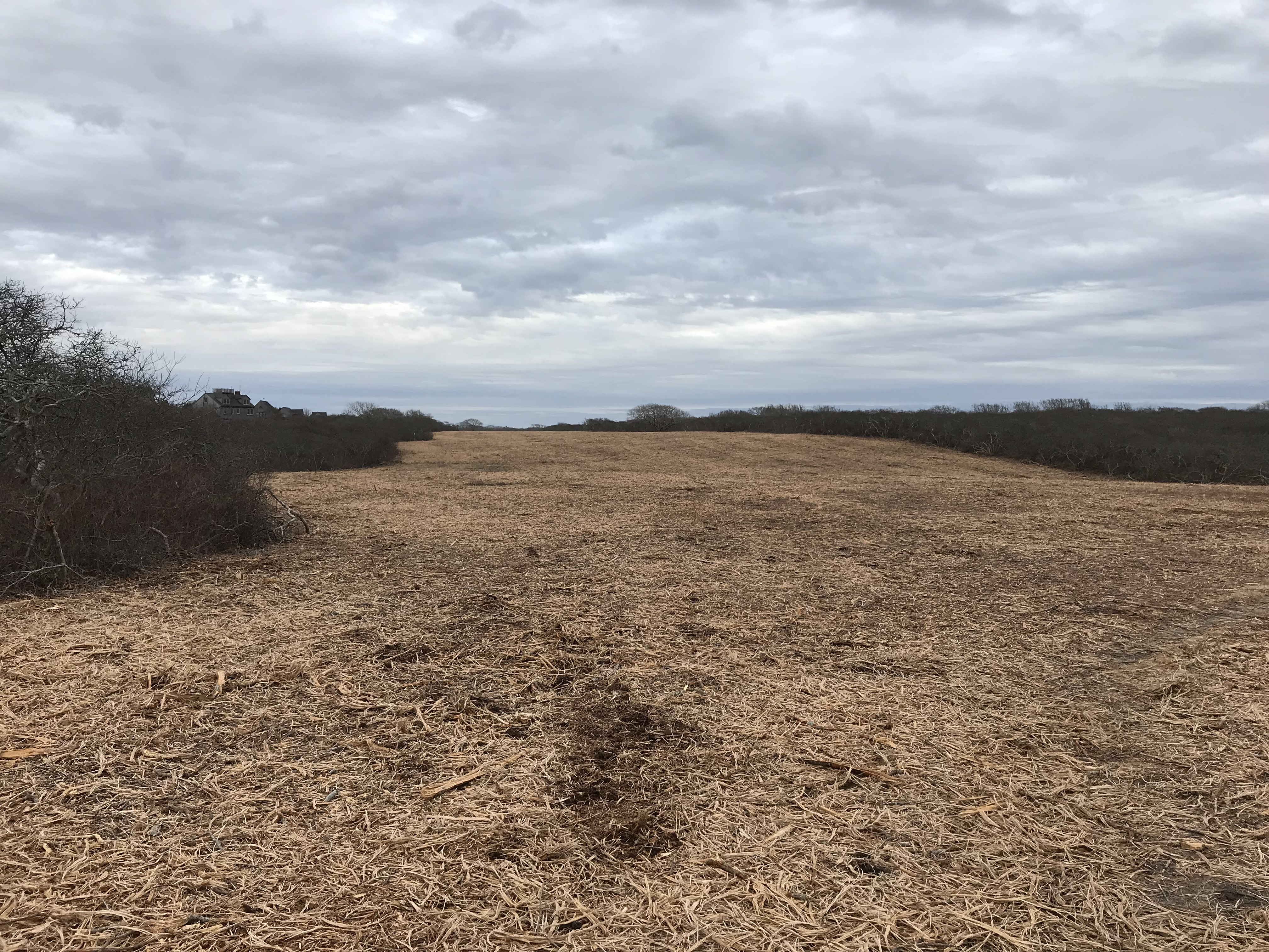 Tom Nevers Firebreak Feb 2019 IMG_1666